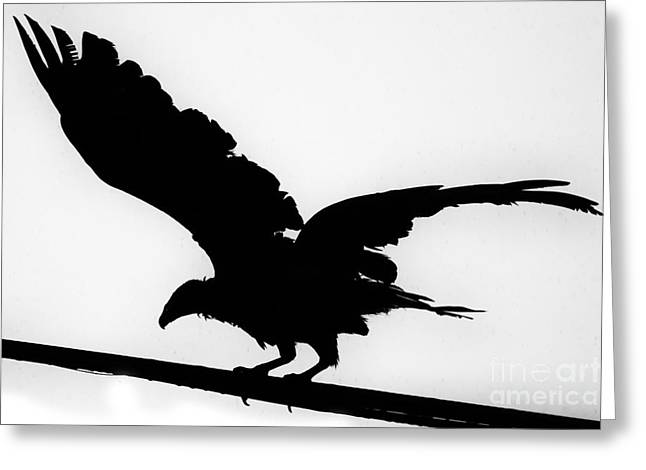 Vulture Silhouettes Greeting Cards - Turkey Vulture Silhouette-Texas Greeting Card by Douglas Barnard