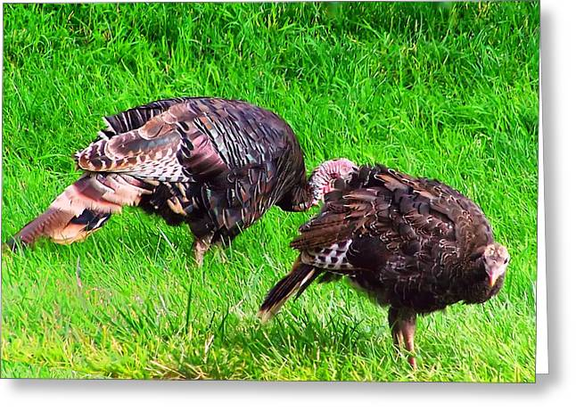 Meleagris Gallopavo Greeting Cards - Turkeys in a field Greeting Card by Chris Flees