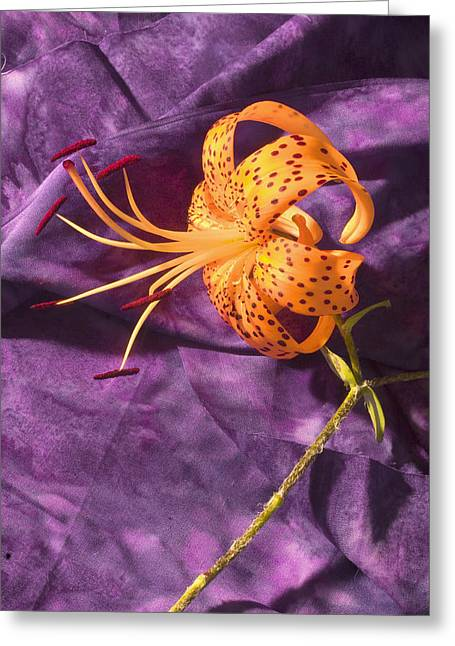 Lilium Greeting Cards - Turks-Cap lilly Flower Greeting Card by Keith Webber Jr