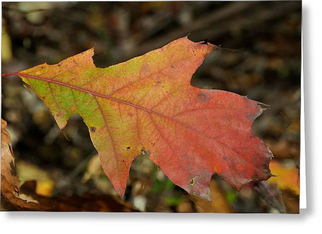 Red Fallen Leave Greeting Cards - Turn A Leaf Greeting Card by JAMART Photography