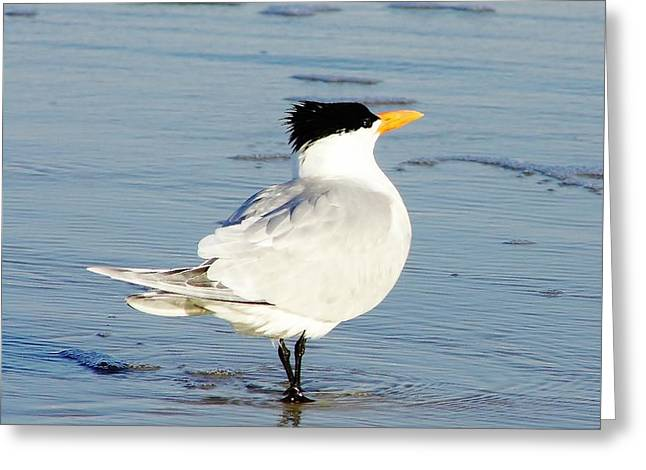Tern Greeting Cards - Turn Around Tern Greeting Card by D Hackett