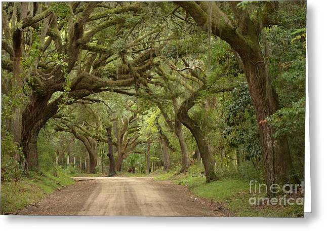 Old Roadway Greeting Cards - Turn Left Aead Greeting Card by Bob Sample