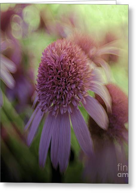 Abstracted Coneflowers Greeting Cards - Turn Our Eyes Greeting Card by Jean OKeeffe Macro Abundance Art