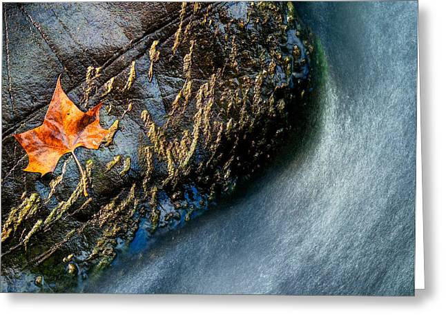 Ellicott Greeting Cards - Turn Towards Fall Greeting Card by Geoffrey Baker