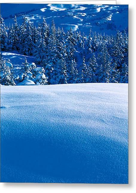 Ak Greeting Cards - Turnagain Pass Kenai Peninsula Ak Usa Greeting Card by Panoramic Images