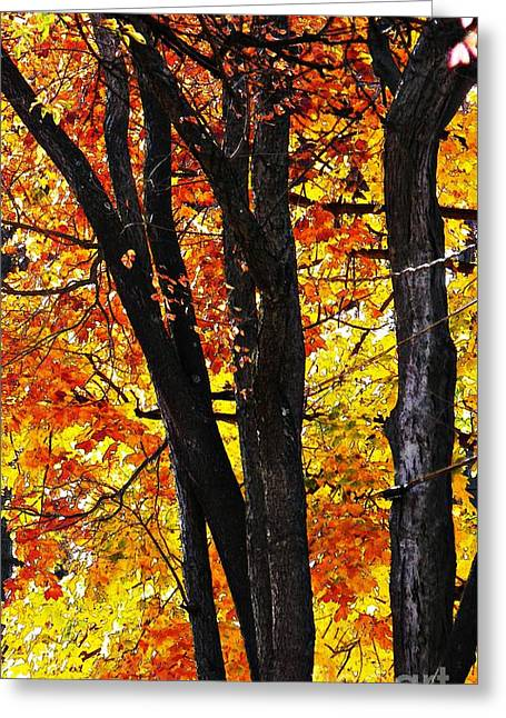 Turning Leaves Greeting Cards - Turning 2 Greeting Card by Sarah Loft