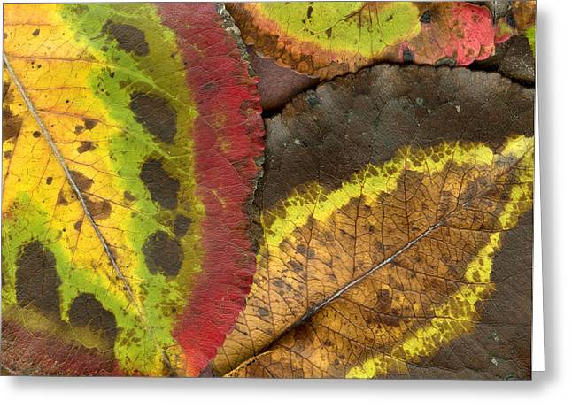 Turning Leaves Photographs Greeting Cards - Turning Leaves 2 Greeting Card by Stephen Anderson