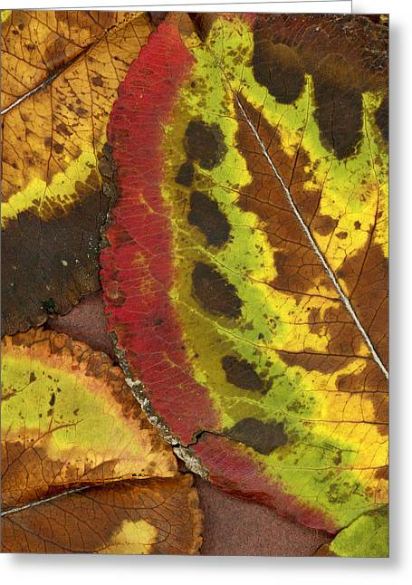 Turning Leaves Photographs Greeting Cards - Turning Leaves 3 Greeting Card by Stephen Anderson
