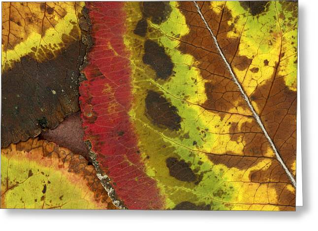 Turning Leaves 3 Greeting Card by Stephen Anderson