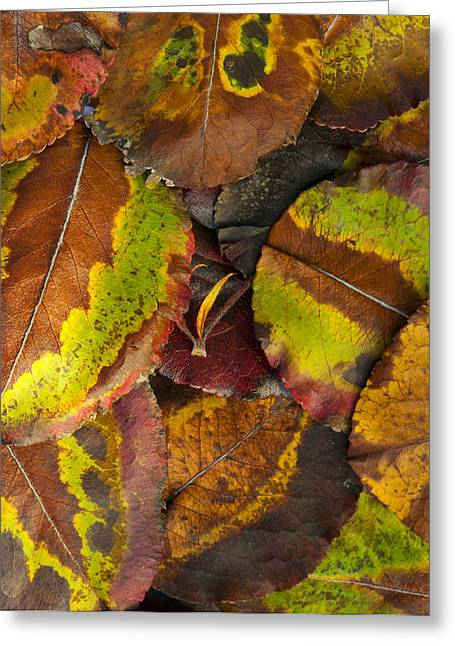Turning Leaves Photographs Greeting Cards - Turning Leaves 4 Greeting Card by Stephen Anderson