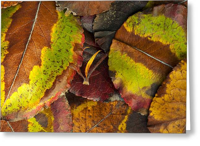 Turning Leaves 4 Greeting Card by Stephen Anderson