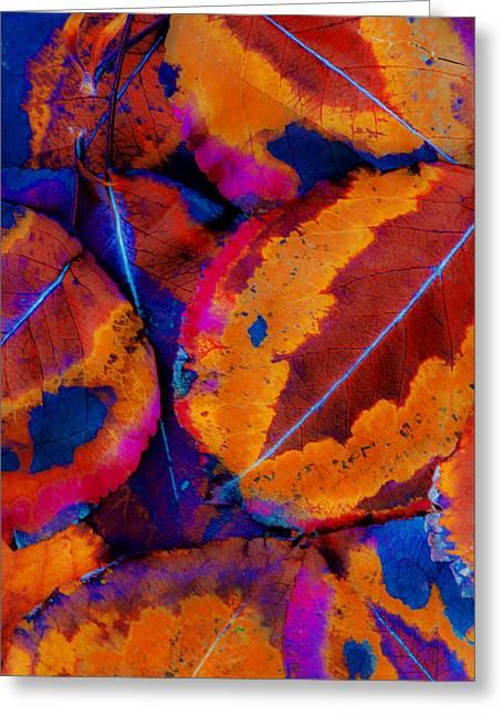 Turning Leaves Digital Art Greeting Cards - Turning Leaves 5 Greeting Card by Stephen Anderson