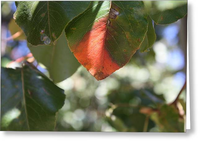 Autumn Photographs Pyrography Greeting Cards - Turning Leaves Greeting Card by Michele Wilson