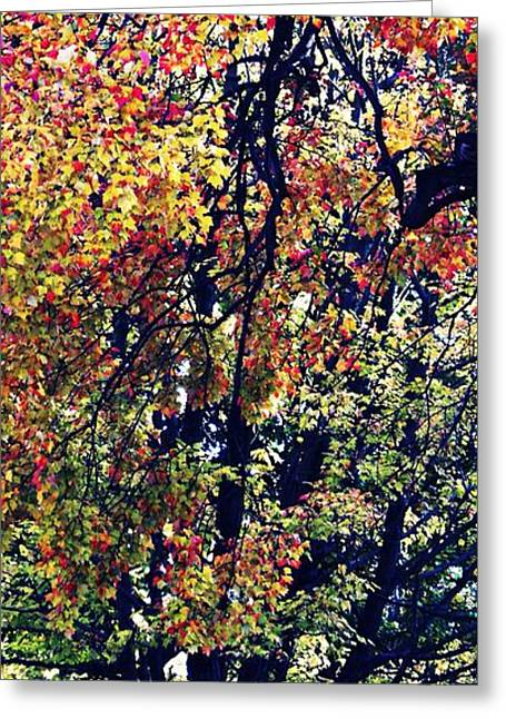 Turning Leaves Greeting Cards - Turning Greeting Card by Sarah Loft