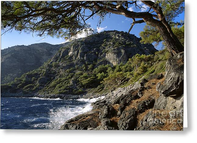 Pinus Resinosa Greeting Cards - Turquoise Coast Turkey Greeting Card by Craig Lovell