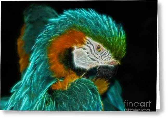 Galveston Digital Art Greeting Cards - Turquoise Macaw Greeting Card by John Kain