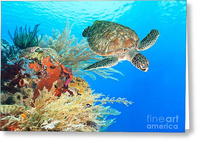 Sulawesi Greeting Cards - Turtle and coral Greeting Card by MotHaiBaPhoto Prints