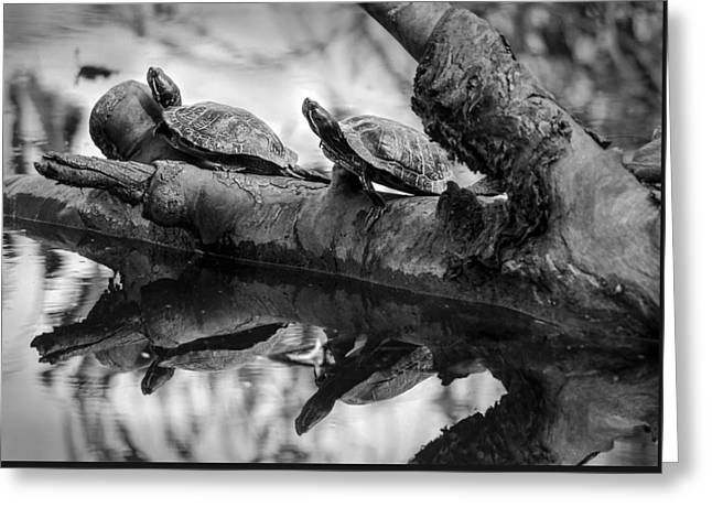 California Beaches Greeting Cards - Turtle BFFs BW By Denise Dube Greeting Card by Denise Dube
