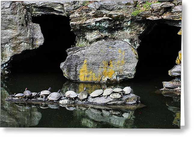 Slider Photographs Greeting Cards - Turtle Caves Greeting Card by JC Findley