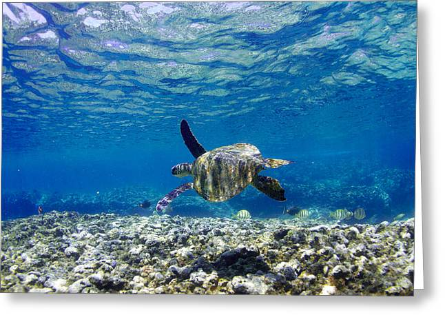 Ocean Art Photography Greeting Cards - Turtle Cruise Greeting Card by Sean Davey