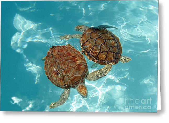 Turtle Dance Greeting Card by Irina Davis