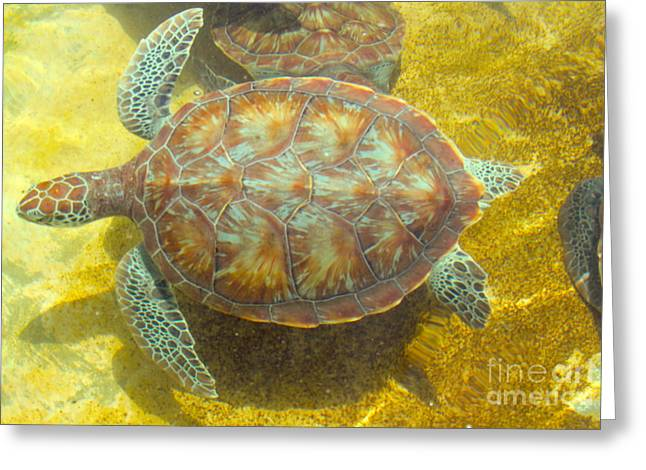 Green Turtle Greeting Cards - Turtle Day Greeting Card by Carey Chen