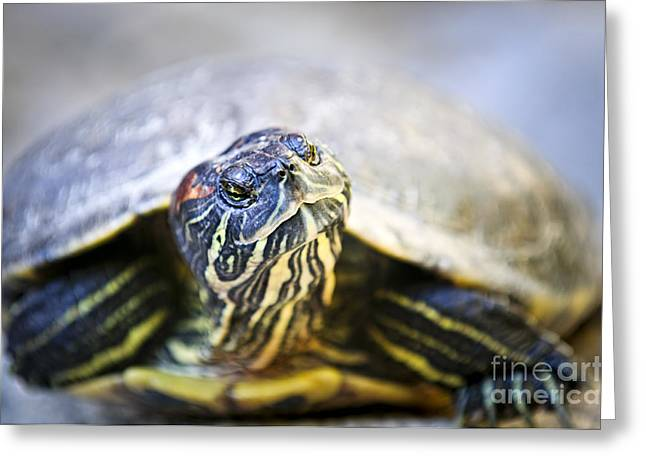 Tropical Wildlife Greeting Cards - Turtle Greeting Card by Elena Elisseeva