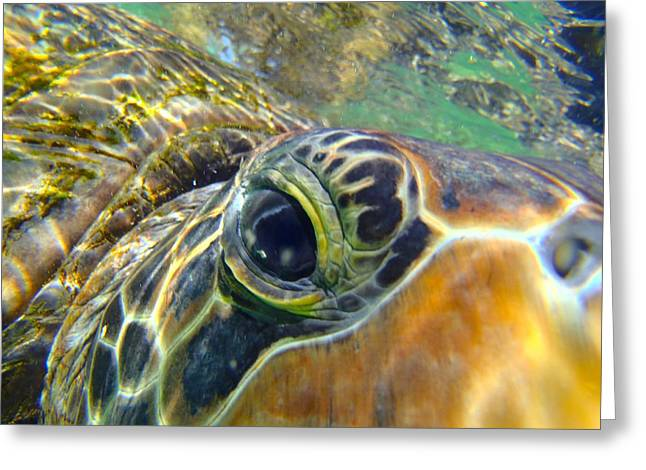 Green Turtle Greeting Cards - Turtle Eye Greeting Card by Carey Chen