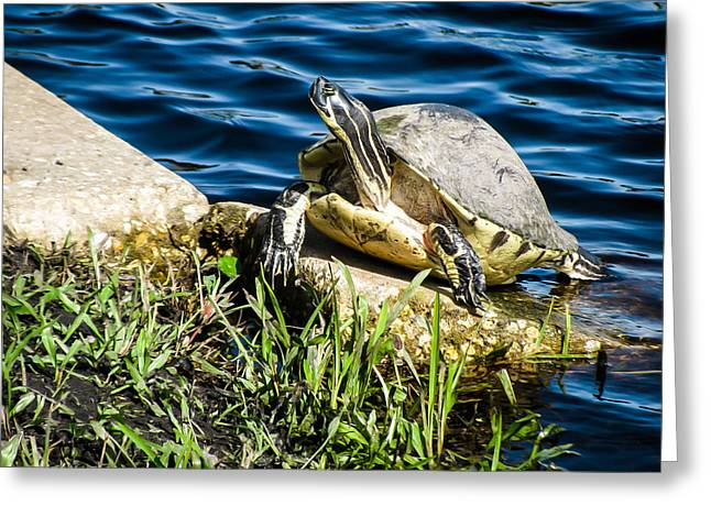 Olive Skin Greeting Cards - Turtle eye Greeting Card by Zina Stromberg