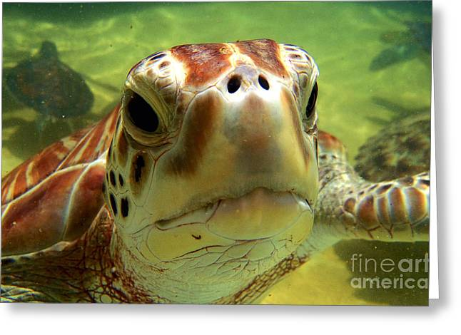 Green Turtle Greeting Cards - Turtle face Greeting Card by Carey Chen