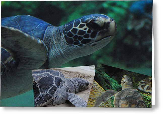 Aquatic Greeting Cards - Turtle Friends Greeting Card by Amanda Eberly-Kudamik