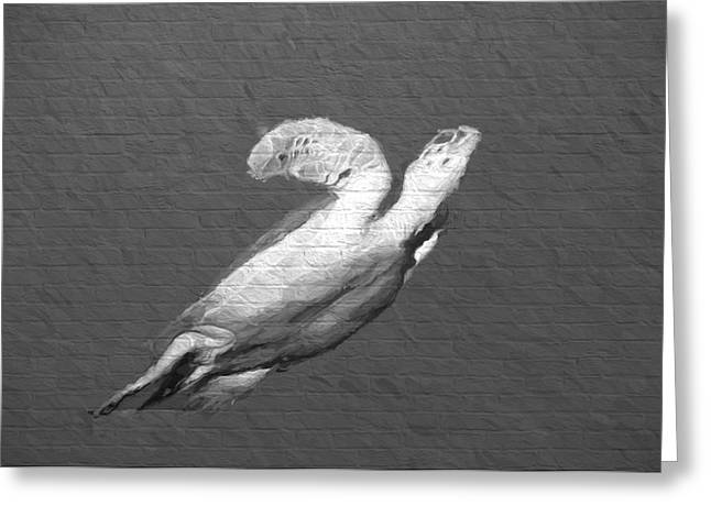 Undersea Photography Greeting Cards - Turtle Gaffiti Greeting Card by Roy Pedersen