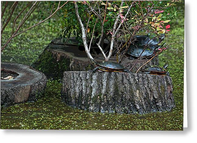 Photographs Digital Art Greeting Cards - Turtle Haven Greeting Card by Suzanne Gaff