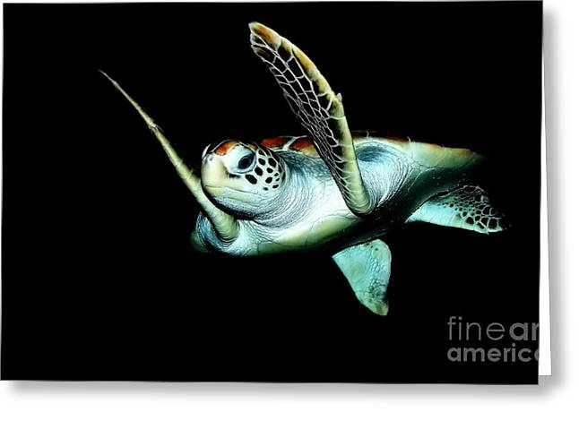 Sea Animals Greeting Cards - Turtle Greeting Card by Michelle Meenawong
