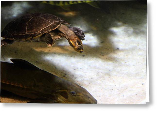 Aquatic Greeting Cards - Turtle - National Aquarium in Baltimore MD - 12121 Greeting Card by DC Photographer