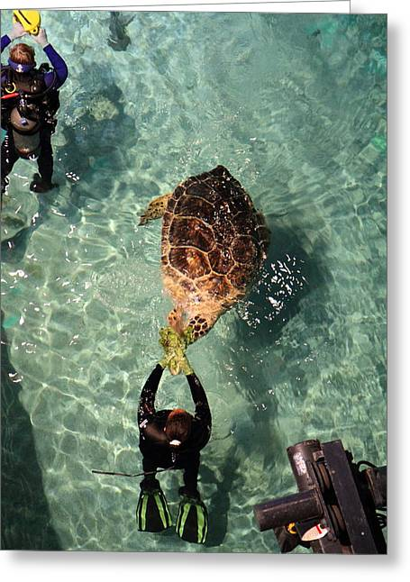 Aquatic Greeting Cards - Turtle - National Aquarium in Baltimore MD - 121216 Greeting Card by DC Photographer