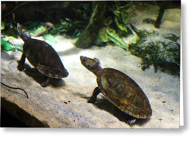 Turtle - National Aquarium In Baltimore Md - 121219 Greeting Card by DC Photographer