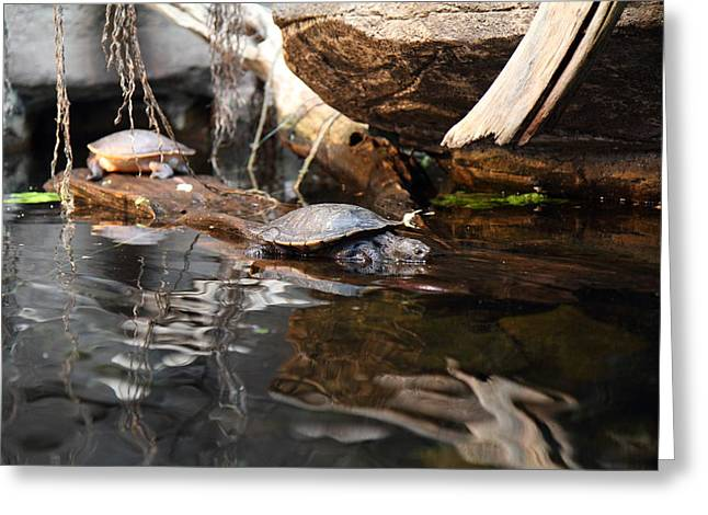Aquatic Greeting Cards - Turtle - National Aquarium in Baltimore MD - 121222 Greeting Card by DC Photographer