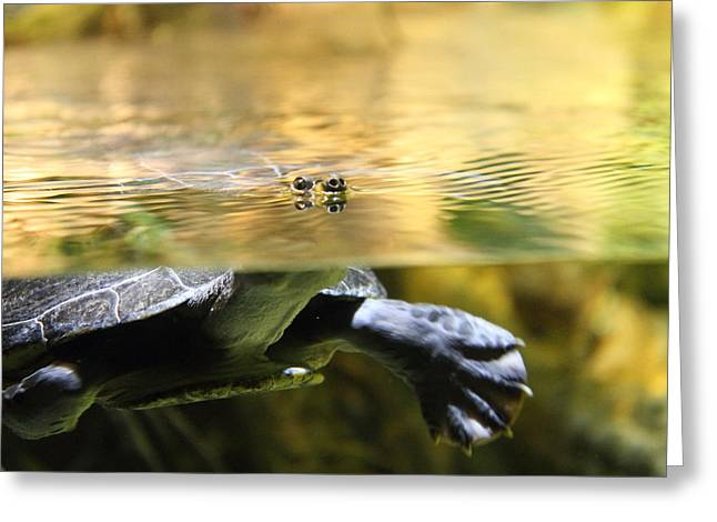 Turtle - National Aquarium In Baltimore Md - 12124 Greeting Card by DC Photographer