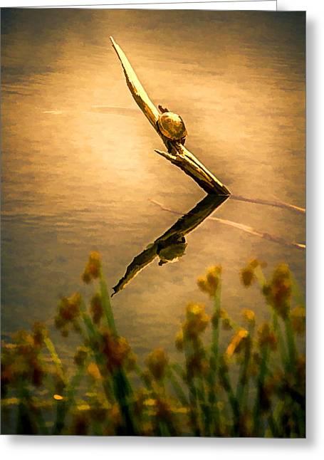 Turtle On Golden Pond Greeting Card by John Haldane