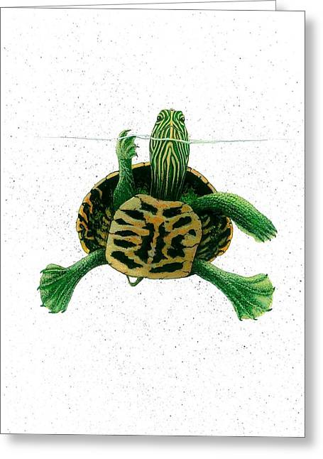 Award Winning Art Greeting Cards - Turtle On Waterline Greeting Card by Steven Schultz