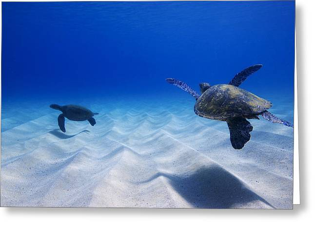 Ocean Mammals Greeting Cards - Turtle Pair Greeting Card by Sean Davey