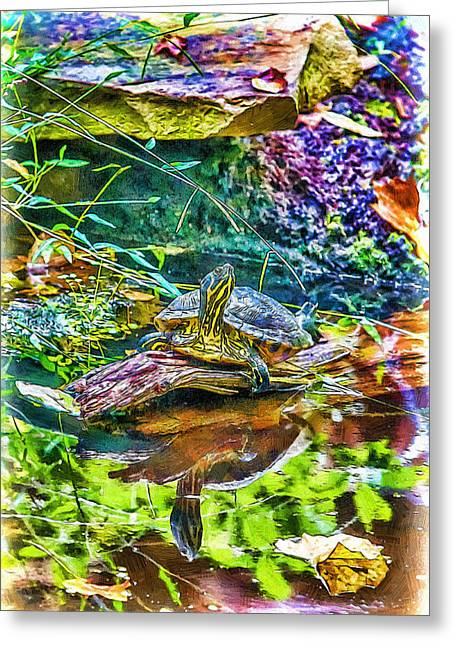 Wildlife Celebration Greeting Cards - Turtle Pond Fall Greeting Card by John Haldane