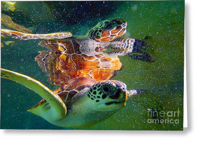 Green Turtle Greeting Cards - Turtle reflection Greeting Card by Carey Chen