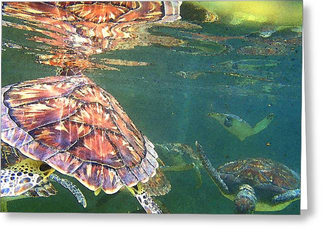 Green Turtle Greeting Cards - Turtle reflections Greeting Card by Carey Chen