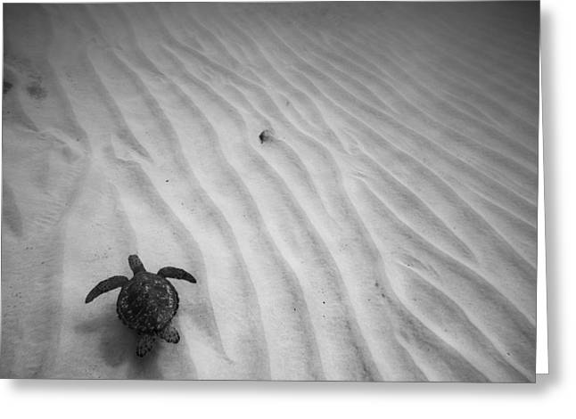 Photographers Fine Art Greeting Cards - Turtle Ridge Greeting Card by Sean Davey