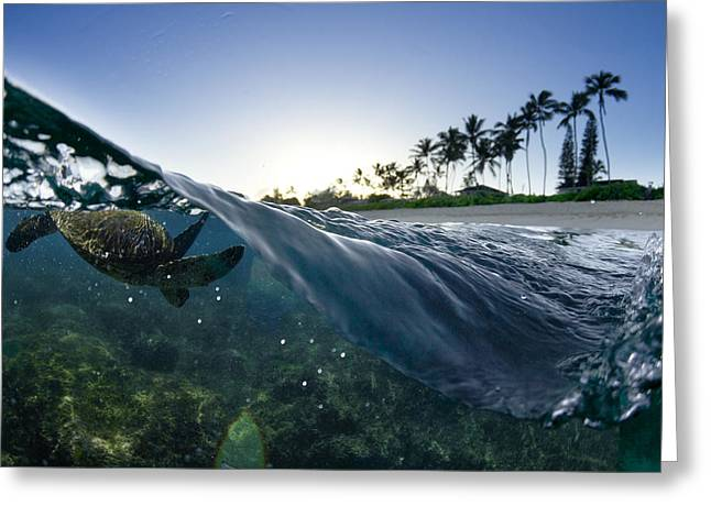 Coconut Trees Greeting Cards - Turtle Split Greeting Card by Sean Davey