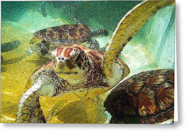 Green Turtle Greeting Cards - Turtle Swim Greeting Card by Carey Chen