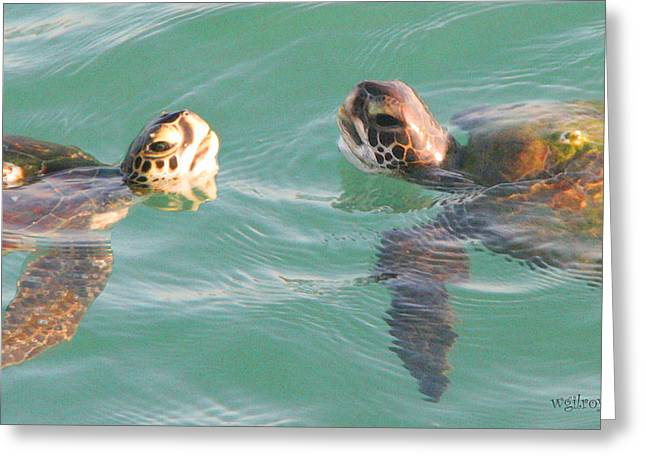 Atlantic Beaches Pyrography Greeting Cards - ...Turtle Talk... Greeting Card by W Gilroy