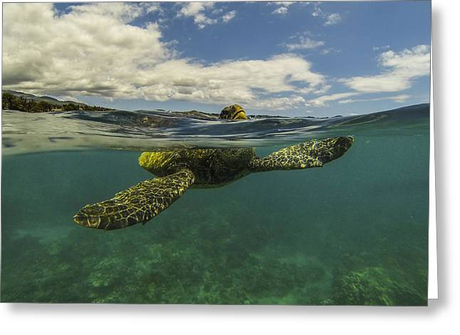 Green Sea Turtle Greeting Cards - Turtles need air too Greeting Card by Brad Scott